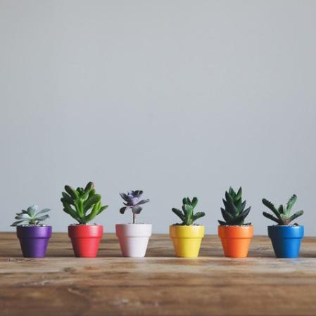 macetitas-pintadas-con-plantitas